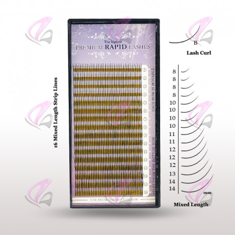 Rapid Mixed Lash B curl (Case)